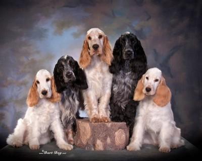 Jolynecs puppies